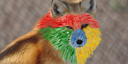 Fox-chrome-840x420