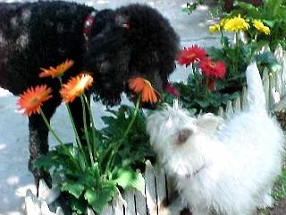 Friends_flowers_3
